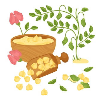 Fagioli e pianta di ceci disegnati a mano