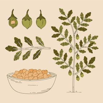 Fagioli di ceci disegnati a mano con illustrazione della pianta