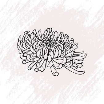 Fiore di crisantemo disegnato a mano in stile arte linea a