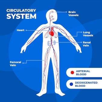 Infografica del sistema circolatorio disegnato a mano