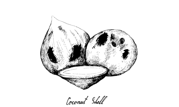 Disegnato a mano di frutti di cocco su sfondo bianco