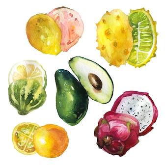 Raccolta disegnata a mano di frutta esotica in stile acquerello.