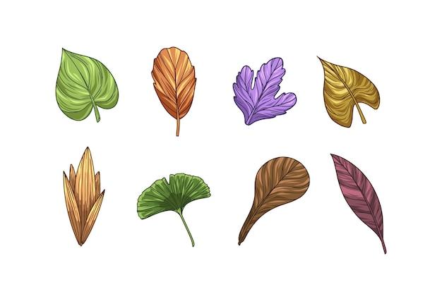 Collezione di foglie colorate disegnate a mano