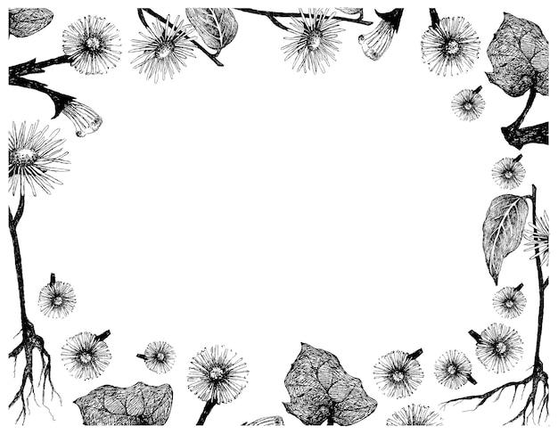 Disegnato a mano di coltsfoot o cornice di fiori di elfdock