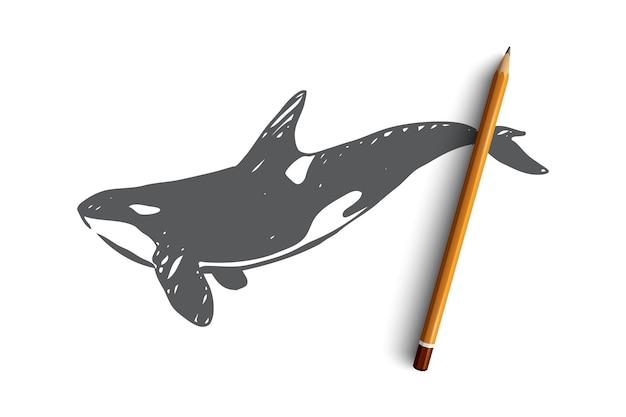 Balena di assassino di pericolo disegnato a mano nello schizzo di concetto dell'oceano