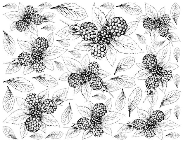 Disegnato a mano di dewberries su sfondo bianco