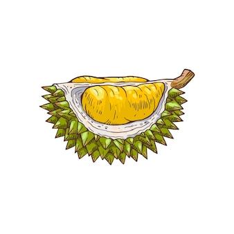 Pezzo di durian disegnato a mano su bianco