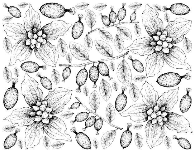 Disegnato a mano di corniolo nano e sfondo di frutti di elaeagnus latifolia