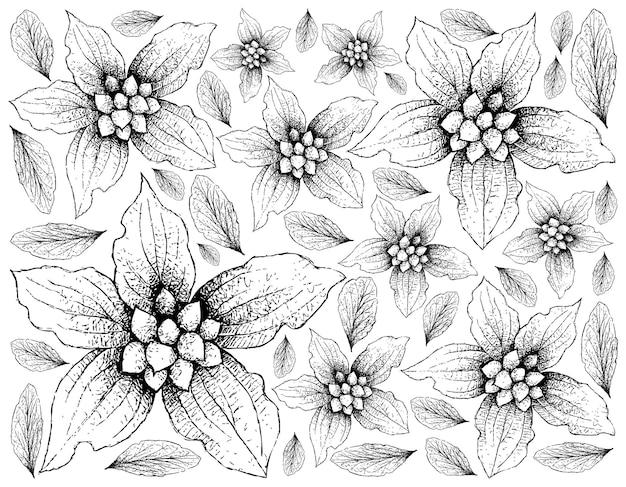 Disegnato a mano di frutti di corniolo nano su priorità bassa bianca