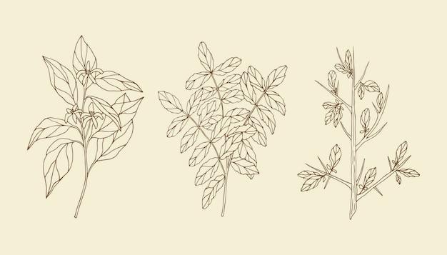 Piante di olio essenziale disegnate a mano