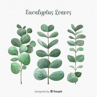 L'eucalyptus disegnato a mano lascia la priorità bassa Vettore Premium