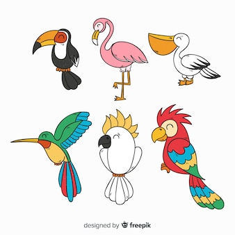 Collezione di uccelli esotici disegnati a mano