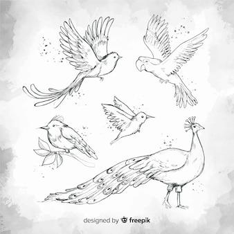 Collezione di uccelli esotici disegnati a mano Vettore Premium