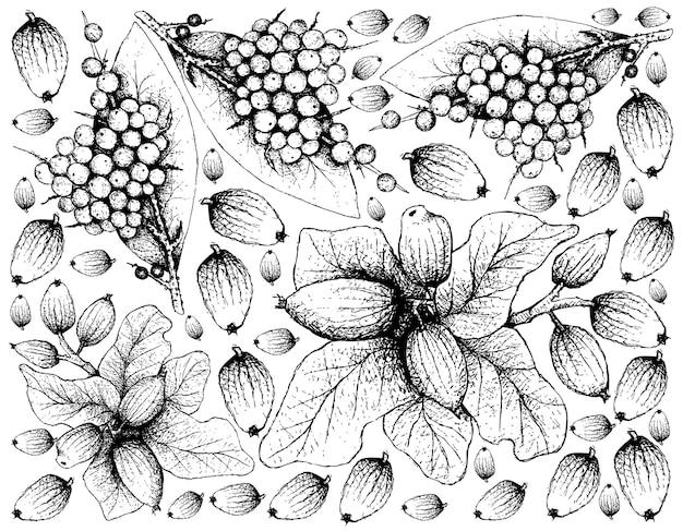 Disegnato a mano di falso pepe nero e frutti di cryptocarya alba