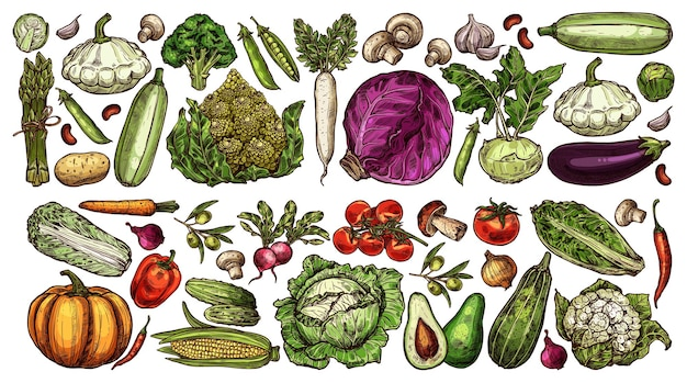 Set di verdure mature disegnate a mano da fattoria e giardino