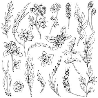 Set di fiori ed erbe disegnati a mano