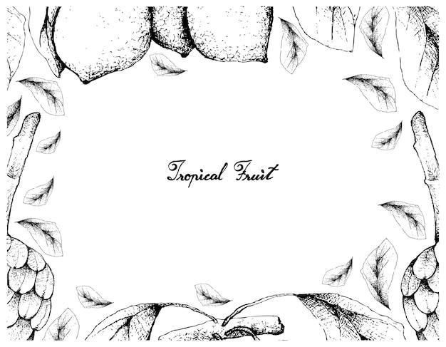 Cornice disegnata a mano di frutti di cherimolia e bacupari