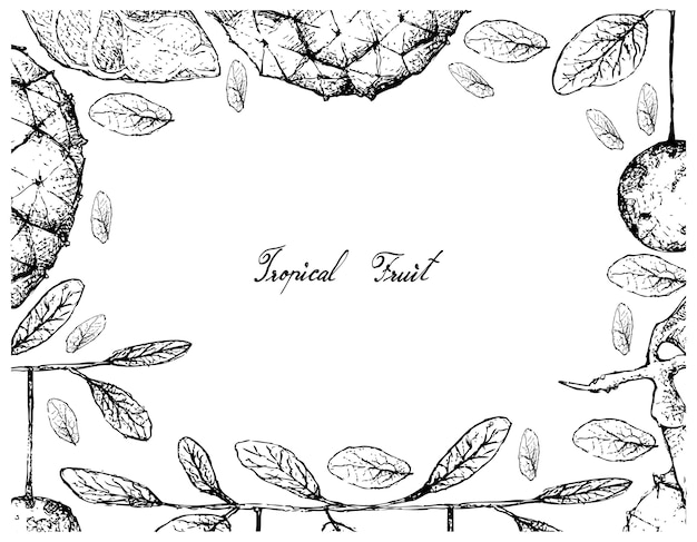 Cornice disegnata a mano di duguetia furfuracea