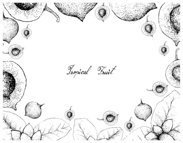 Cornice disegnata a mano di falsi frutti di mangostano ed ellipiopsis cherrevensis