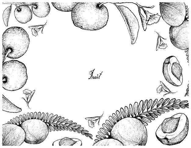 Cornice disegnata a mano di uva spina indiana e prugna di sego