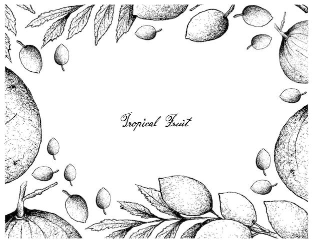 Cornice disegnata a mano di frutti di santol