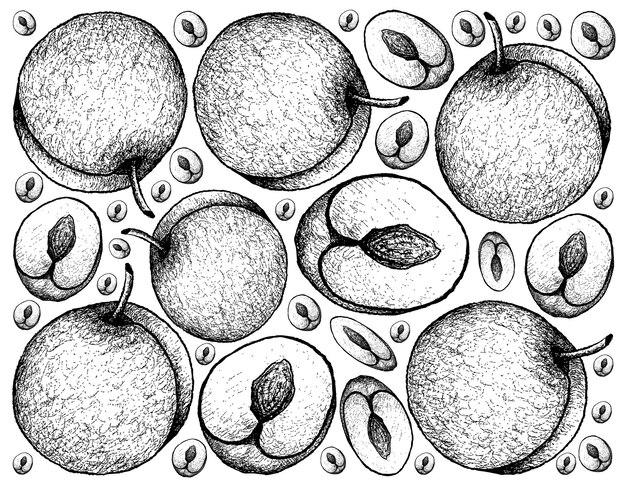 Frutta fresca disegnata a mano della prugna