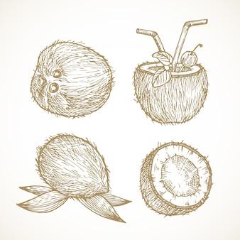 Raccolta di illustrazioni vettoriali di frutta disegnata a mano, schizzi di noci di cocco, scarabocchi di cibo esotico naturale ...