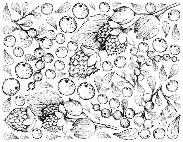 Disegnato a mano di lamponi dorati dell'himalaya e frutti di flueggea virosa