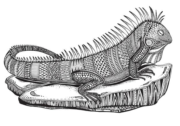 Iguana ornato grafico disegnato a mano su una pietra con reticolo etnico di doodle