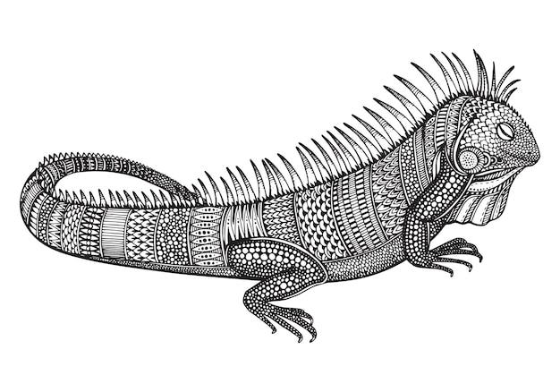 Iguana ornato grafico disegnato a mano con reticolo etnico di doodle. illustrazione per libro da colorare, tatuaggio, stampa su t-shirt, borsa. su uno sfondo bianco.