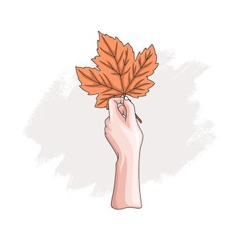 Mano disegnata a mano che tiene la foglia d'acero 3