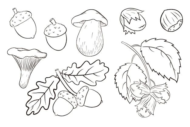Insieme di elementi del raccolto disegnato a mano. foglie di quercia, ghiande, nocciola, funghi. collezione decorativa della foresta per la progettazione e la decorazione di stampe, adesivi, inviti e biglietti di auguri. vettore premium