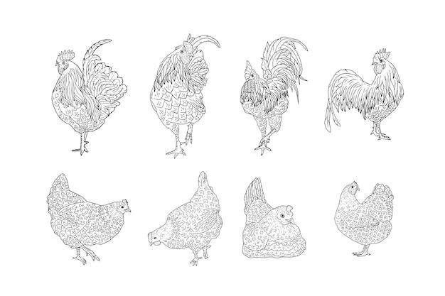 Set di galline e galli disegnati a mano