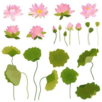 Illustrazione disegnata a mano di fiori e foglie di loto, set floreale retrò per stampa di moda, carta da parati per decorazioni di compleanno in vettoriale