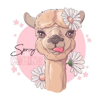 Illustrazione disegnata a mano. ritratto di alpaca carino con fiori.
