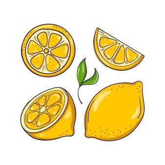 Illustrazione disegnata a mano con limoni e foglie.