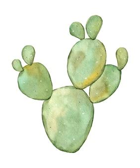 Illustrazione disegnata a mano con cactus acquerello