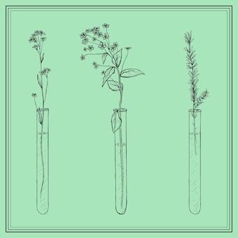 Piante di lavanda disegnate a mano, fiori in vitro o fiala