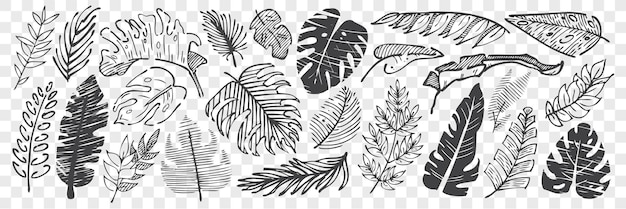 Insieme di doodle di foglie disegnate a mano. raccolta di disegno a matita gesso schizzi fogliame di albero di forma diversa isolato su sfondo trasparente. parte dell'illustrazione delle piante.