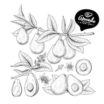 Insieme decorativo dell'avocado di arte linea disegnata a mano isolato su sfondi bianchi