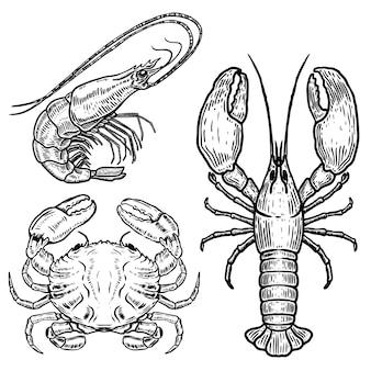 Illustrazioni disegnate a mano dell'aragosta, del granchio, del gamberetto su fondo bianco. frutti di mare. elementi per poster, emblema, segno, badge, menu. immagine