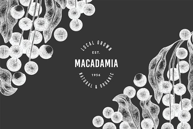 Modello di progettazione di rami e noccioli di macadamia disegnato a mano. illustrazione di alimenti biologici sulla lavagna. illustrazione di dado d'epoca. stile botanico inciso.