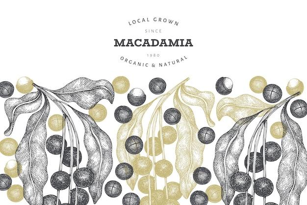 Modello di progettazione di rami e noccioli di macadamia disegnato a mano. illustrazione vettoriale di alimenti biologici su sfondo bianco. illustrazione di dado retrò. banner botanico in stile inciso.