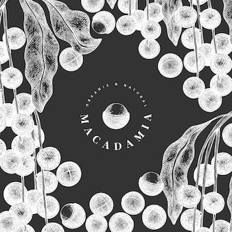Modello di ramo e noccioli di macadamia disegnato a mano. illustrazione di alimenti biologici a bordo di gesso.