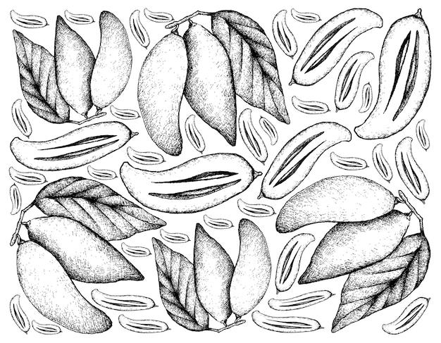 Hand drawn madan fruits.