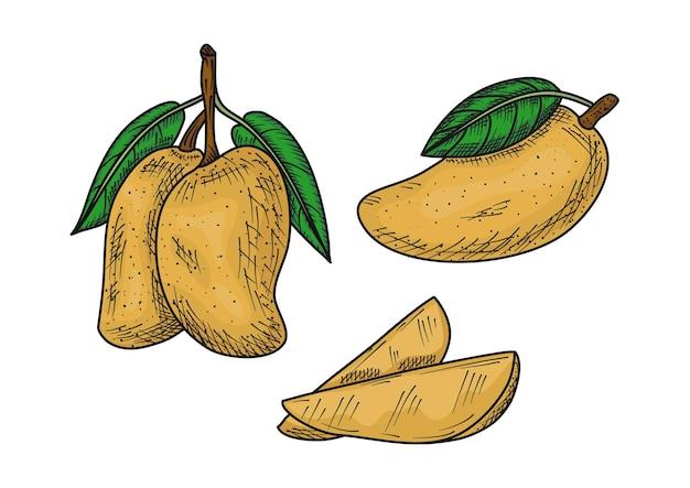 Illustrazione di mango disegnata a mano