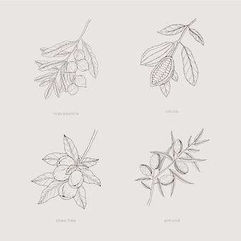 Collezione di piante monocromatiche disegnate a mano