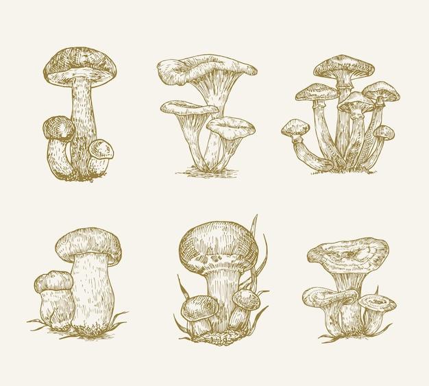 Raccolta di illustrazioni vettoriali di funghi disegnati a mano champignon funghi di miele tappo arancione boletus ...