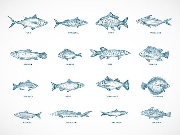 Pacchetto di illustrazione disegnata a mano oceano o mare e pesce di fiume.