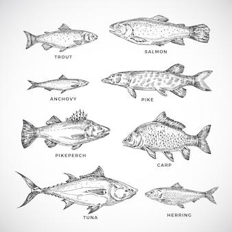 Insieme disegnato a mano oceano o mare e pesce di fiume.